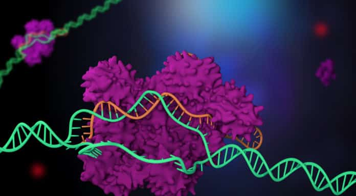 CRISPR Code Cracked For Precise Human Genome Editing