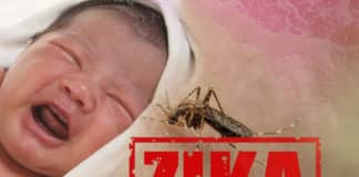 IIT Mandi Researchers Discover New Drug Against Zika Virus