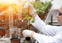 DBT & ICAR Sings MoU To Promote Agricultural Biotechnology Sector