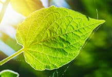 21 New Genes Discovered That Regulate Photosynthesis
