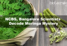 NCBS, Bangalore Scientists Decode Moringa Mystery