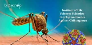 Institute of Life Sciences Scientists Develop Antibodies Against Chikungunya