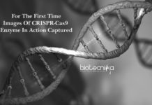For The First Time - Images Captured Of CRISPR-Cas9 Enzyme In Action