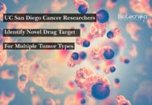 UC San Diego Cancer Researchers Identify Novel Drug Target For Multiple Tumor Types