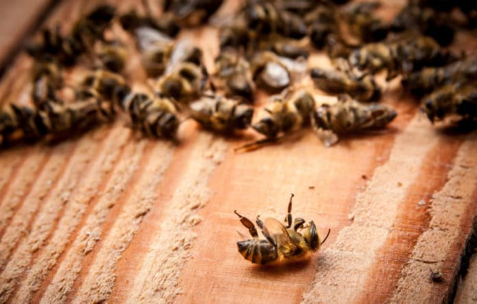 Billions of Bees in Brazil, Drop Dead