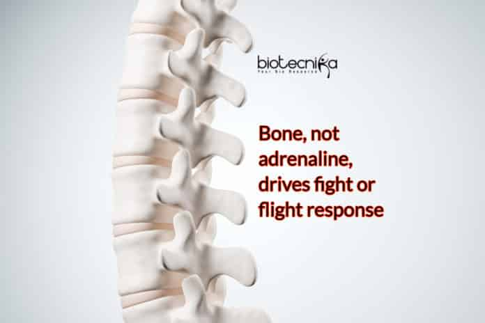 Bones Triggers Fight-or-Flight Response, Not Adrenaline- Bizarre Discovery