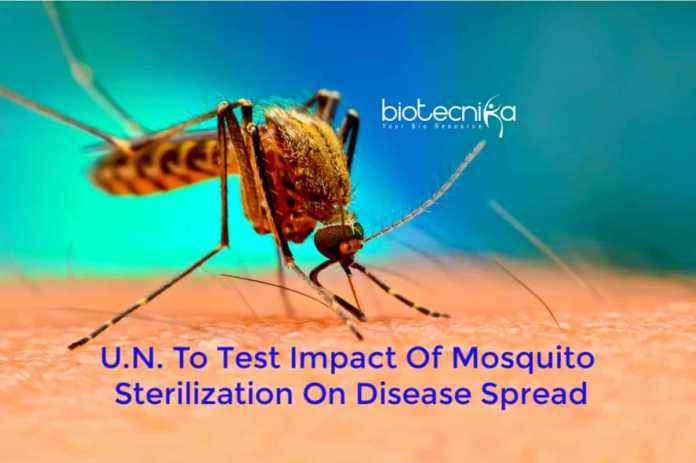 UN mosquito sterilization technology