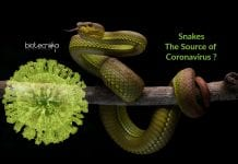 snakes could be the source for coronavirus
