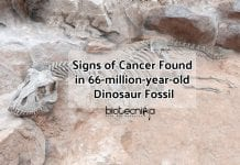 Cancer seen in Dinosaur Fossil (1) (1)