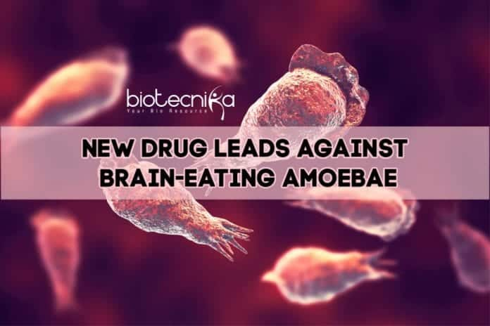 Drug Against Brain-Eating Amoebae
