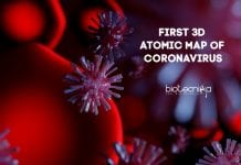 First 3D Atomic Map of Coronavirus
