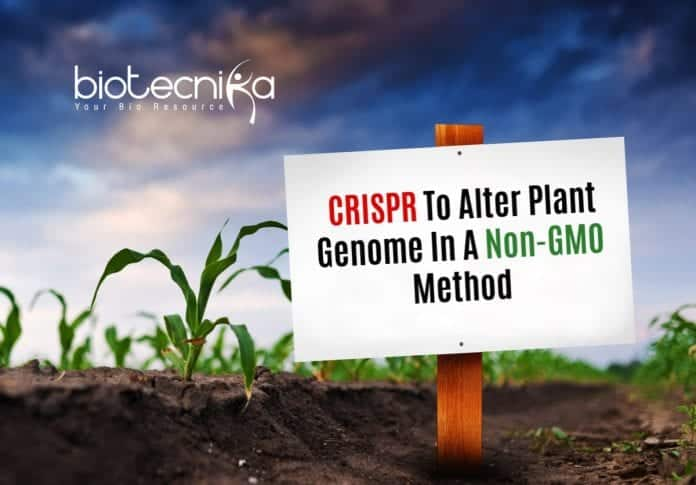 Non-GMO CRISPR Method