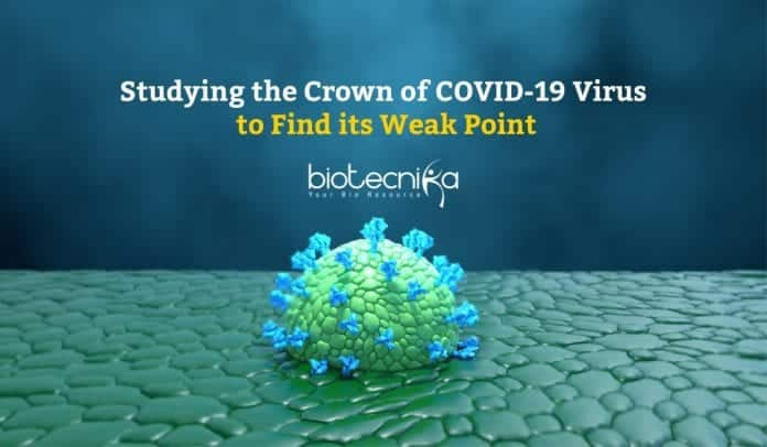 Studying the crown of COVID-19 virus
