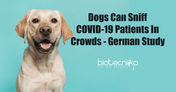 Dogs can sniff COVID-19 patients