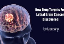 New Drug Targets for Glioblastoma