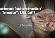How Bats Fight COVID-19