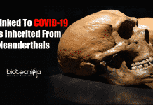 Neanderthals DNA linked to COVID-19