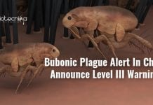 bubonic plague reported in china