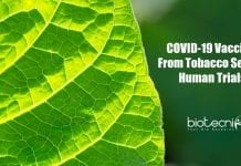 COVID-19 vaccine from tobacco