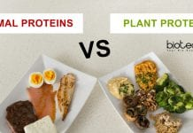 Plants a better source of protein than animals
