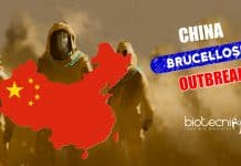 Brucellosis Outbreak in China