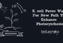 new path to enhance photosynthesis