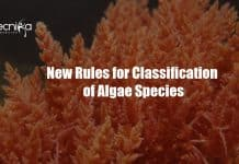 New rules for algae classification