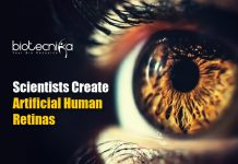 artificial human retinas