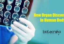New Organ Discovered in human body