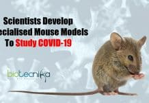 Specialized Mouse Models