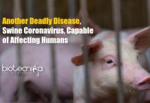 Swine Coronavirus Could Infect Humans