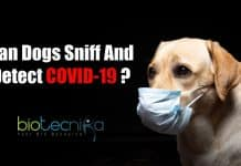 Can Dogs Sniff and detect COVID