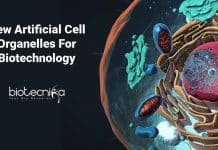 New Artificial Cell Organelles