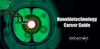 Nanobiotechnology career