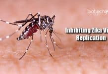 Inhibiting Zika virus