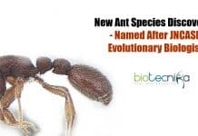 new ant species discovered
