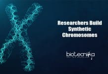 TU Delft's Artificial Chromosome