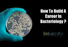 A career as a Bacteriologist