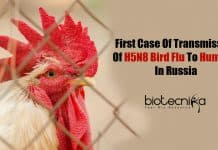 H5N8 bird flu in humans