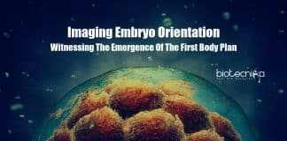 Imaging Embryo Orientation