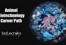 Animal Biotechnology Career Opportunities