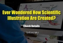 Guidelines For Efficient Scientific Illustrations