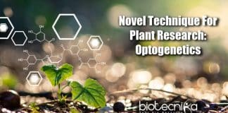Optogenetics In Plant Research, Plant Science