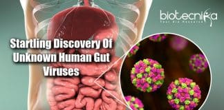 Unknown Human Gut Viruses