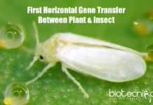 First Plant To Animal Gene Transfer,