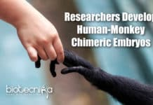 Chimeric Human-Monkey Embryos
