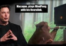Neuralink Monkey Brain Implant