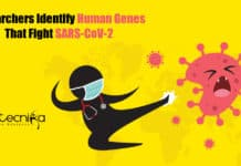 Human Genes That Fight COVID-19
