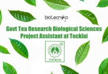 Tea Research Job Tocklai